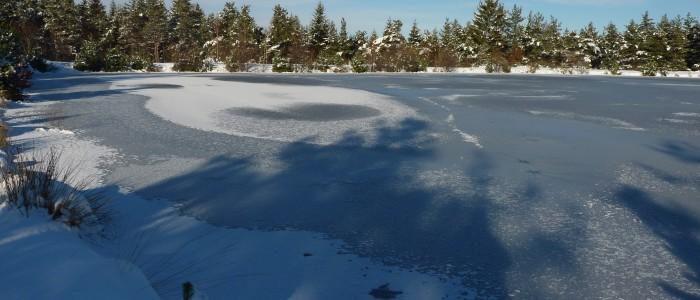 L'étang gelé de Michel Ferrier (2)