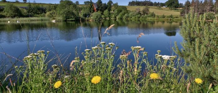 L'étang de pèche abrite des truites ,des sandres ,des brochets ,des blackbass ...